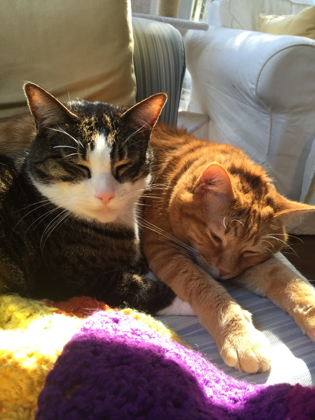 sunbeam brothers